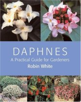 Daphnes: A Practical Guide for Gardeners