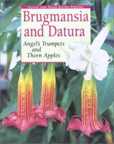 Brugmansia and Datura: Angel's Trumpets and Thorn Apples