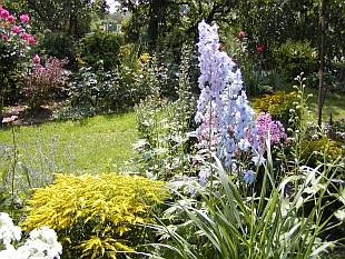 Červenec v zahradě