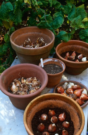 jarní cibuloviny dům a zahrada nejen do země jarní krásu