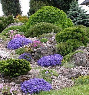 Skalka - barevný jarní koberec | rostliny / skalničky | Garten.cz