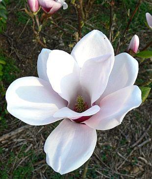 magnolia satisfaction. Black Bedroom Furniture Sets. Home Design Ideas