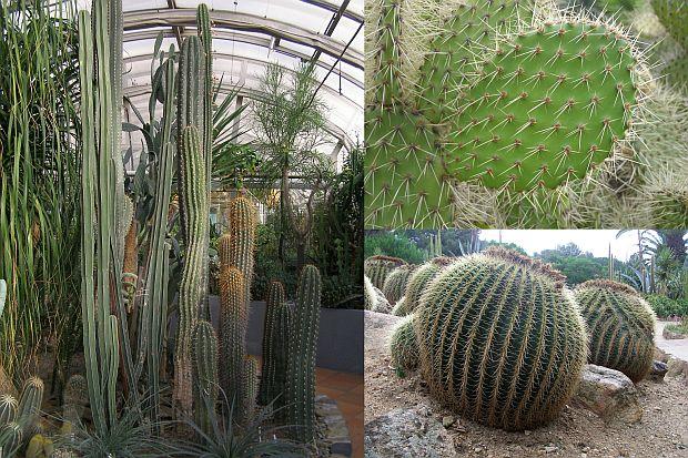 Kaktusy - čeleď stovky tváří
