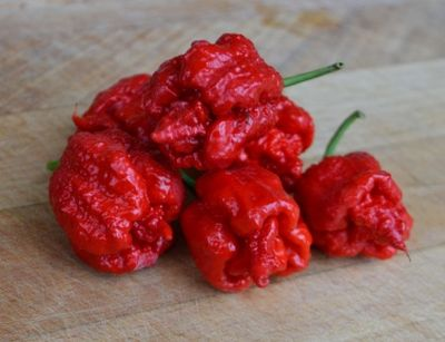 Capsicum chinenses 'Carolina Reaper' - chilli paprička