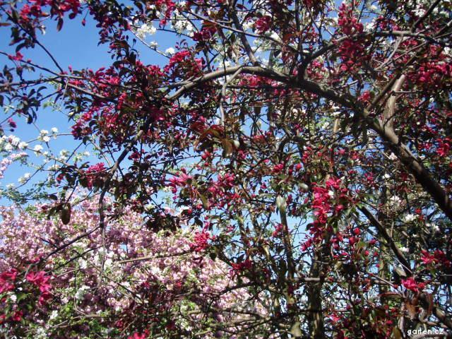 List. stromy a keře květen 2010