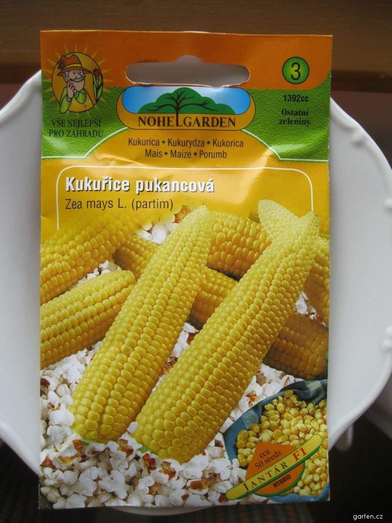 Kukuřice pukancová (Zea mays convar everta)