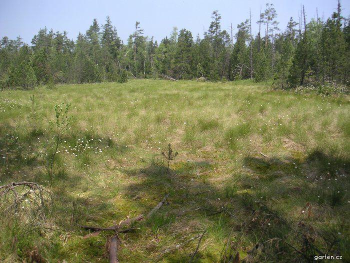 Národní přírodní rezervace Červené blato