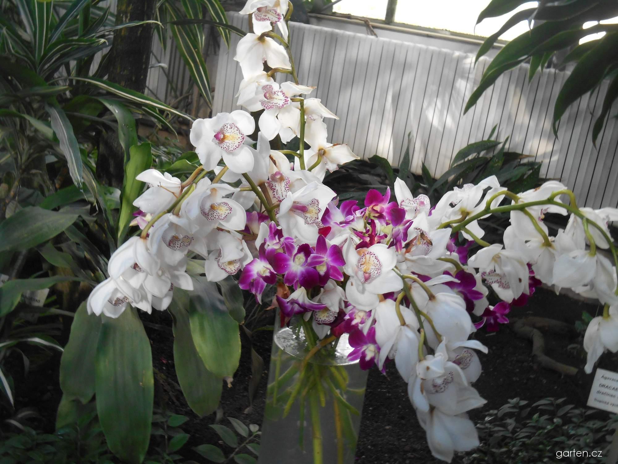 Orchideje - pěstování