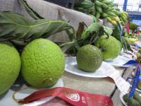 (Artocarpus altilis) Breadfruit Tree - fruit